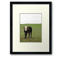 Valley Cows Framed Print