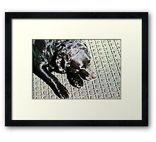 An Afternoon Snooze. Framed Print