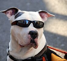 Hey Dude...Nice Shades!!! by Jennifer Hulbert-Hortman
