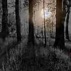 SCAREY FOREST IN THE NIGHT by Ekascam