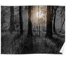 SCAREY FOREST IN THE NIGHT Poster