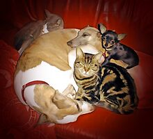 Pet pile by Ivy Izzard