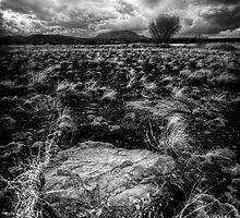 That Rock is in my Way...Wait by Bob Larson