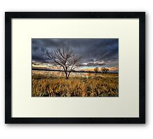 Winter Trees Sunset Framed Print