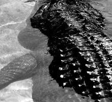 Gator Country by jammingene