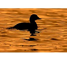 Scoter Silhouette Photographic Print