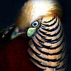 Fine feathers make fine birds by iamelmana