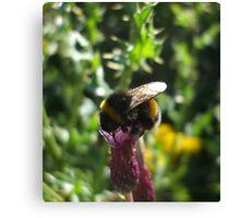 thistle bee Canvas Print