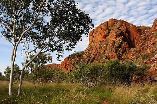 A ghost-gum basks in the sunlight beneath a speckled-cloud sky by Tim Coleman
