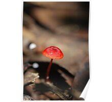 """Mycena viscidocruenta aka """"Ruby Bonnet"""" Poster"""