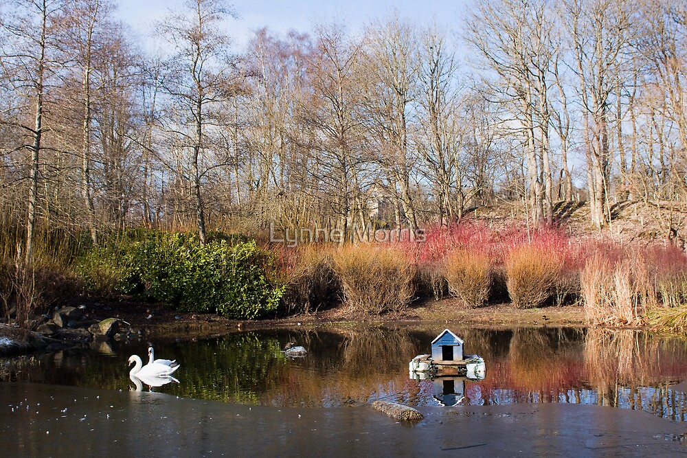 A Winter's Pond by Lynne Morris