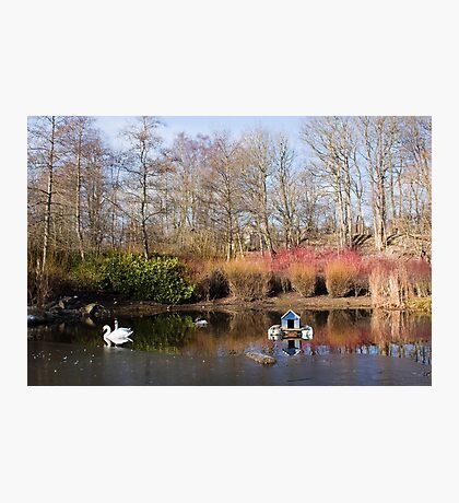 A Winter's Pond Photographic Print