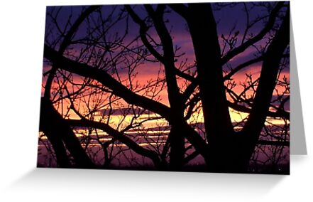 bonnie winter sunset no.3 by Babz Runcie