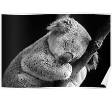 Wake Me Later - Sleeping Koala Poster
