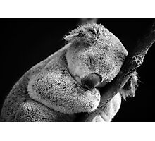 Wake Me Later - Sleeping Koala Photographic Print