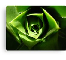 the green beauty Canvas Print