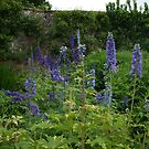 Delphiniums #1 in Harmony Garden by Babz Runcie