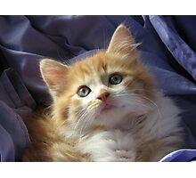 Cute baby Ginger Megs! Photographic Print