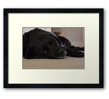 Sleepy Old Dog Framed Print