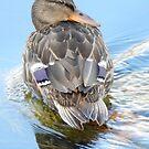 happy duck by Babz Runcie