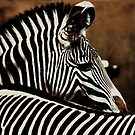 The beauty of stripes by Alan Mattison