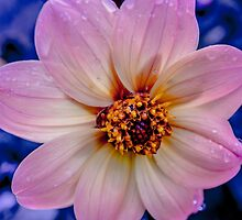 Different Perspective by Marilyn Schmidlin