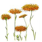 Calendula - October by Vicky Webb