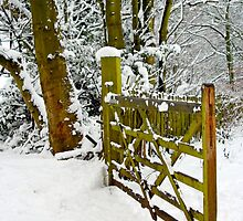 This way to the snow by Debbie Ashe