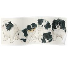 Japanese Chin Puppies Poster