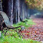 Autumn by Marco Vegni