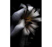 White Light Photographic Print