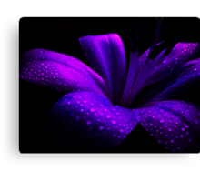 Pearl Lily. Canvas Print