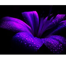 Pearl Lily. Photographic Print