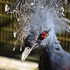 Portrait of a Common Crowned Pigeon by streetraven