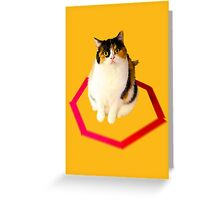 cat trap Greeting Card