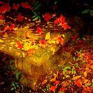 Spring or Autumn? by Susanne Van Hulst
