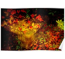 Spring or Autumn? Poster