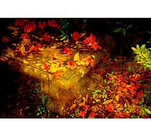 Spring or Autumn? Photographic Print