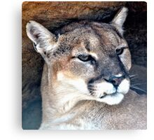 Female Mountain Lion Canvas Print