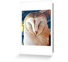 Sleeping Barn Owl Greeting Card