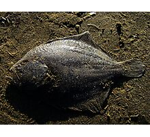 Beautiful fish in sand Photographic Print