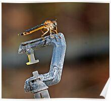 Robber Fly on Garden Sprinkler Poster