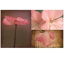 Pink textured flower collage Photographic Print