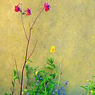 Sunlit Wall Flowers...........................Most Products by Fara