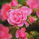 Rose Garden by Alana Ranney