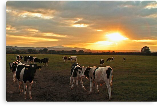 The Herd at Sunset by Martina Fagan