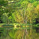 On Green Lake by Martina Fagan