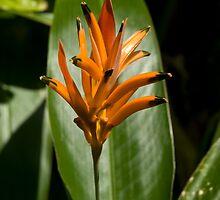 Orange Bromeliad by G. Patrick Colvin