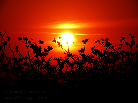 Sunset in Paradise - unedited by rocamiadesign