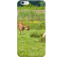 Cows on a field  iPhone Case/Skin